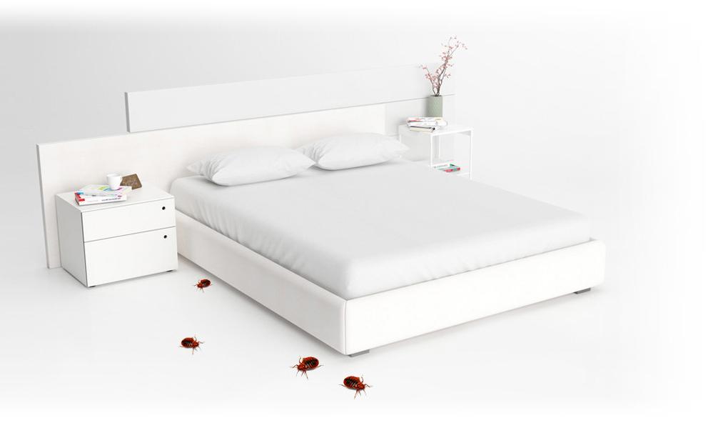 Domobios Punaises de lit